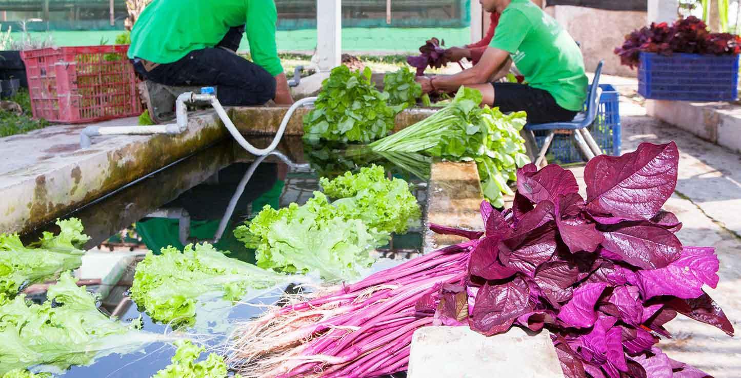 Organic Farming West Java